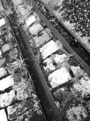 Rail et pavés © Nathalie Tiennot, Bordeaux.