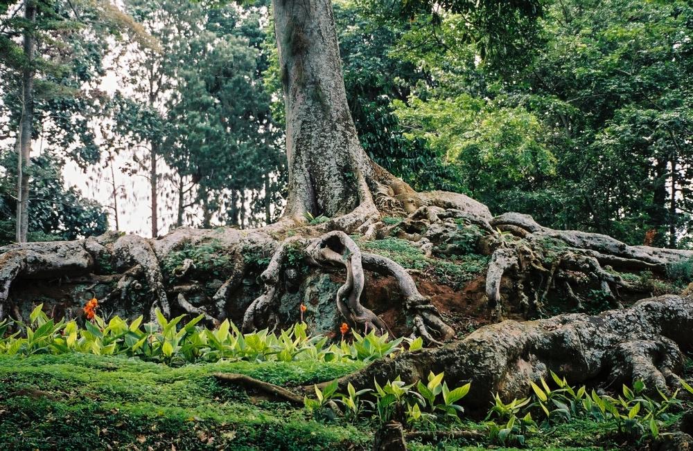 Kampala © Nathalie Tiennot, 2003