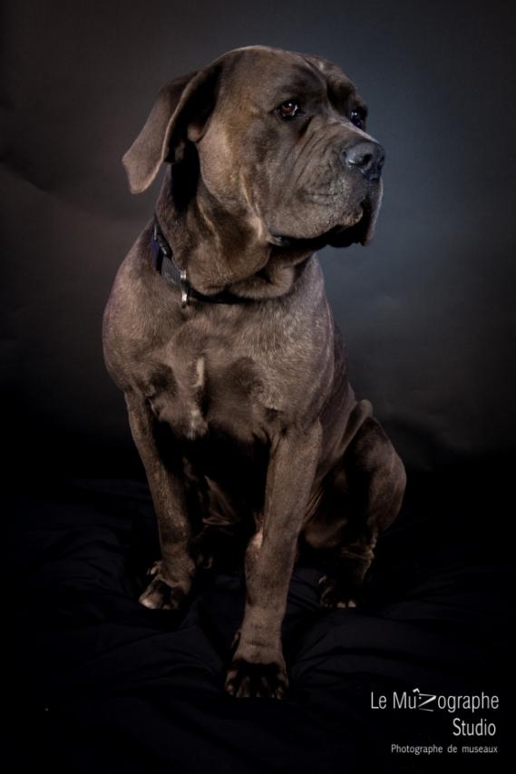 studio-cani-14